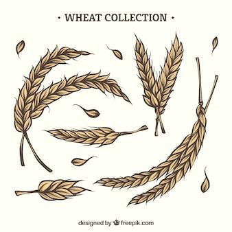Colección de trigo hecha a mano vector gratuito