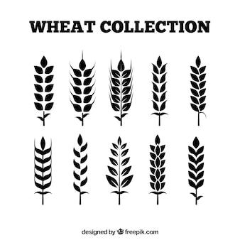 Colección de trigo plano vector gratuito