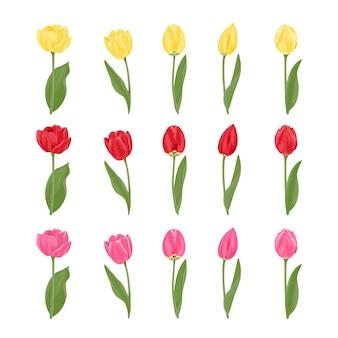 Colección de tulipanes de diferentes formas y colores.