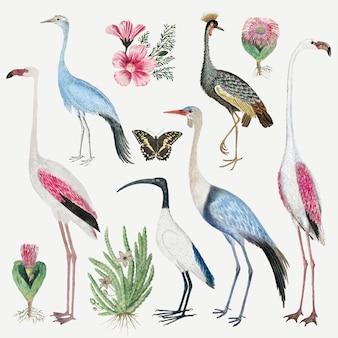 Colección de vectores de aves antiguas ilustraciones de animales en acuarela, remezcladas de las obras de arte de robert jacob gordon