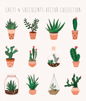 Colección de vectores de cactus y suculentas con doce plantas de interior decorativas.