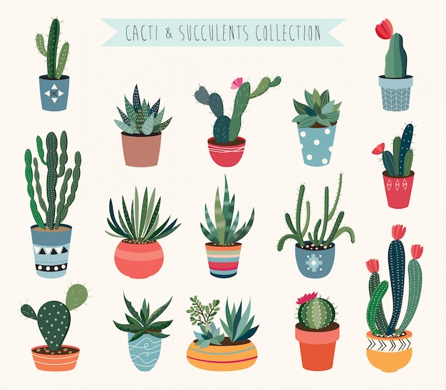 Colección de vectores de cactus y suculentas.