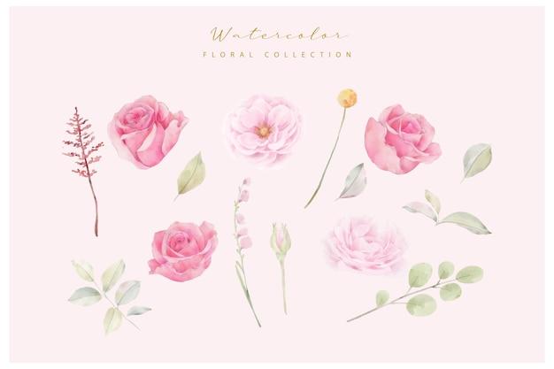 Colección de vectores de flores rosa rosa acuarela