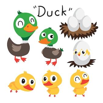 Colección de vectores de pato