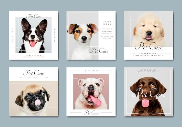 Colección de vectores de plantillas de banner de cuidado de mascotas