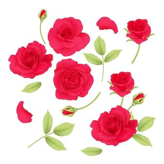 Colección de vectores de rosas rojas