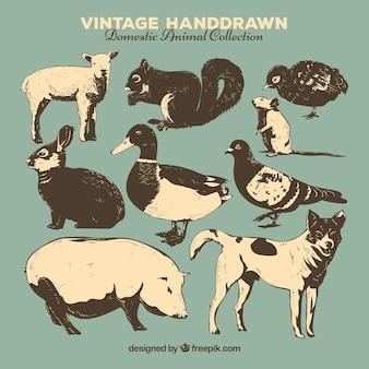 Colección vintage de animales dibujados a mano