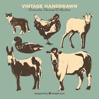 Colección vintage de animales de granja dibujados a mano