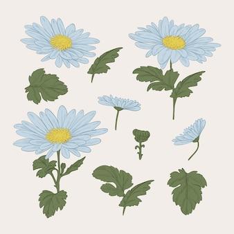 Colección vintage de flores azules de botánica