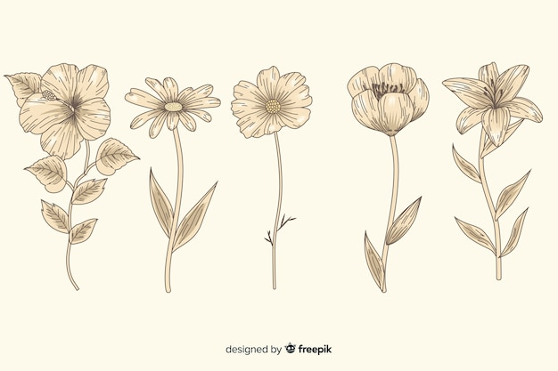 Colección vintage de flores de botánica
