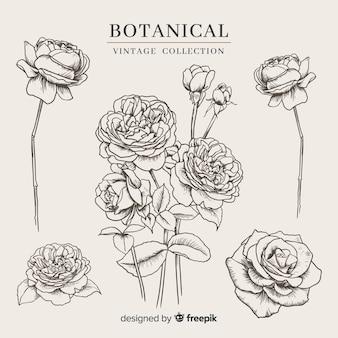 Colección vintage de flores botánicas