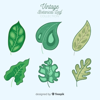 Colección vintage de hojas botánicas