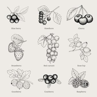 Colección vintage natural berries