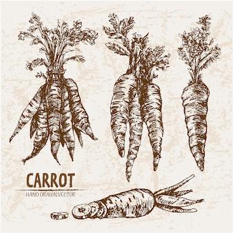 Colección de zanahorias dibujadas a mano