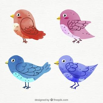 Colecciónde acuarela de pájaros