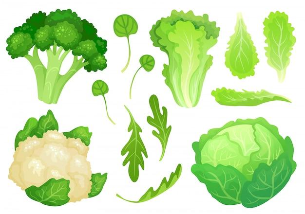 Coles de dibujos animados. hojas de lechuga fresca, ensalada de dieta vegetariana y col verde jardín saludable. ilustración de cabeza de coliflor
