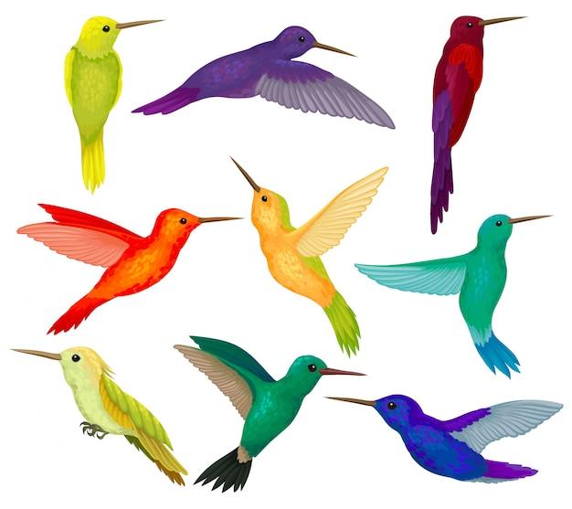 Colibríes sest, pequeños pájaros con plumaje colorido brillante ilustración sobre un fondo blanco