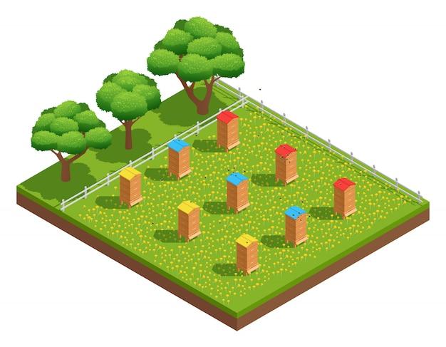 Colmenar de apicultura con colmenas de madera sobre hierba con flores cerca de composición isométrica de árboles