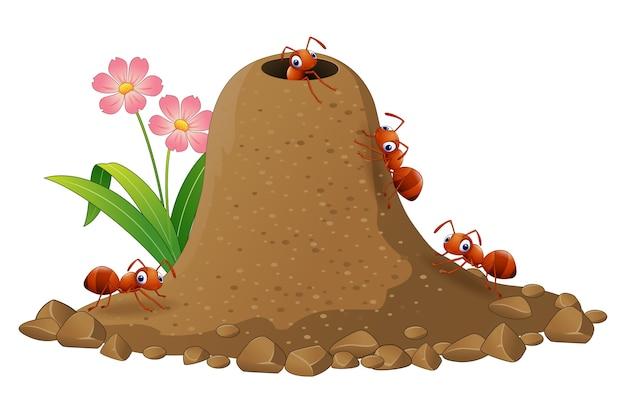 Colonia de hormigas de dibujos animados y hormiguero