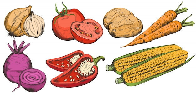 Colorida composición de arte lineal con bio vegetales