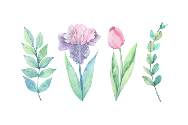 Coloridas flores acuarelas