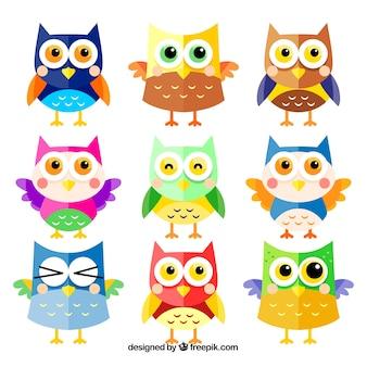 Colorido conjunto de nueve búhos de dibujos animados