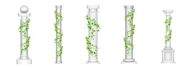 Columnas de hiedra, pilares antiguos con hojas de plantas de liana trepadora verde en blanco