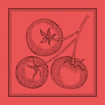 Comida italiana de la planta de tomate dibujada
