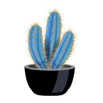 Composición de cactus con imagen aislada de pilosocereus magnificus en maceta en blanco