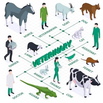 Composición de diagrama de flujo veterinario isométrico con imágenes aisladas de animales, aves y personajes de propietarios y médicos
