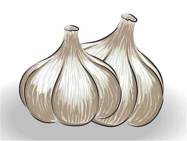 Composición de dos bulbos de ajo dibujados de forma realista