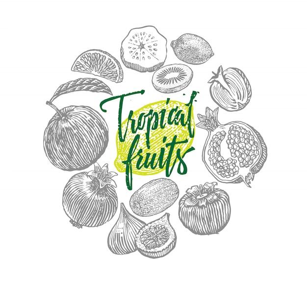 Composición de elementos de dibujo de frutas tropicales exóticas