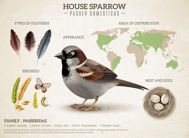 Composición del esquema de pájaros con imagen realista de gorrión e imágenes de semillas de plumas y mapa mundial