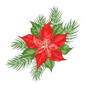 Composición de flor de nochebuena roja aislada sobre fondo blanco.