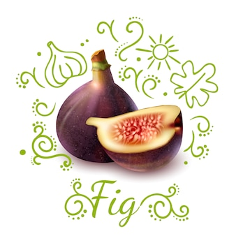 Composición de garabatos de frutas exóticas de higo