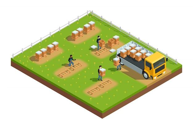 Composición isométrica de la escena con trabajadores instalando colmenas para colmenares de apicultura en pasto con flo