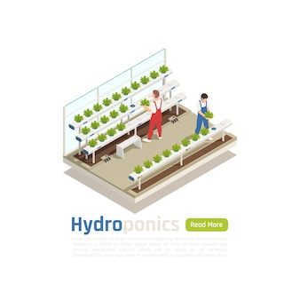 Composición isométrica de invernadero hidropónico moderno con 2 trabajadores que controlan las plantas que crecen sin el banner del sistema de riego del suelo