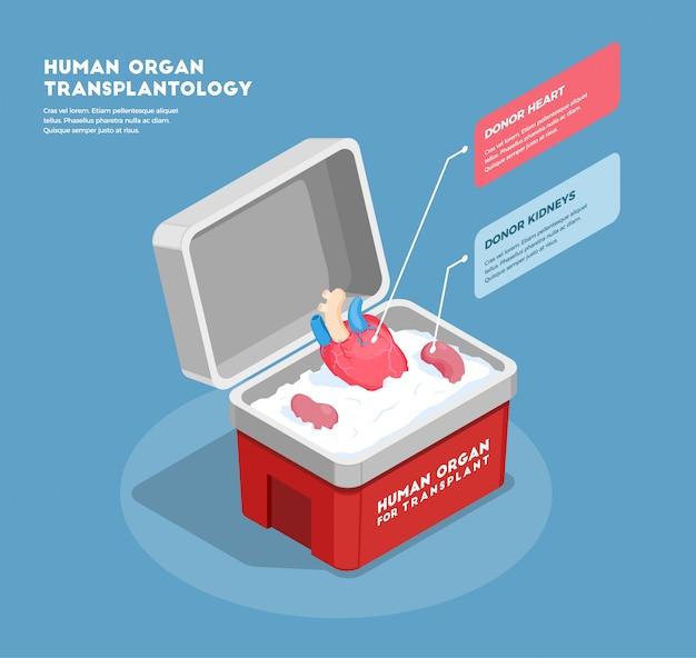 Composición isométrica de órganos humanos con corazón y riñones de donante en contenedor médico 3d