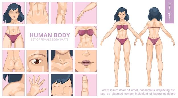 Composición de partes del cuerpo femenino de dibujos animados