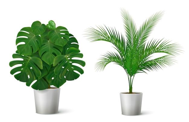 Composición realista con ilustración de plantas tropicales en macetas
