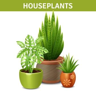 Composición realista de plantas de interior
