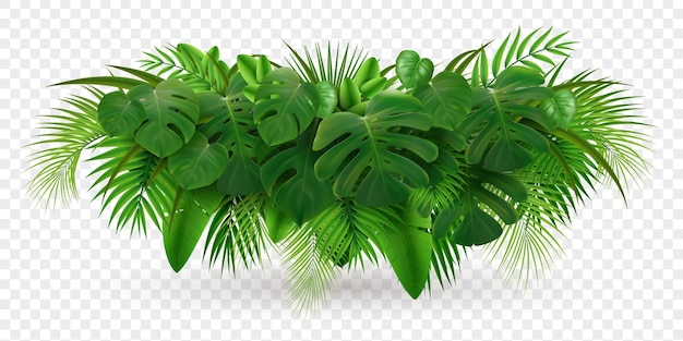 Composición realista de rama de palma de hojas tropicales con imagen de pila de hojas verdes aislada