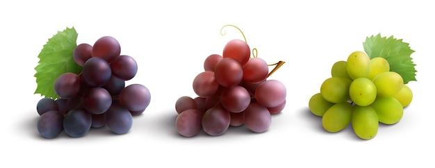 Composición realista de uvas con rosa roja y uvas blancas aisladas