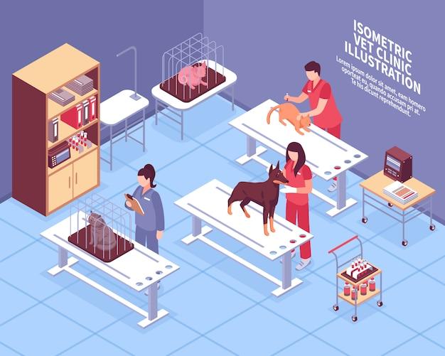 Composición veterinaria isométrica