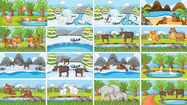 Composiciones de animales en la naturaleza.