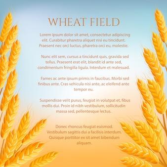 Concepto de campo de trigo con espacio para texto