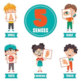 Concepto de cinco sentidos con órganos humanos para niños
