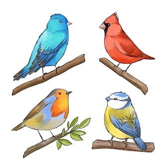 Concepto de colección de aves acuarela