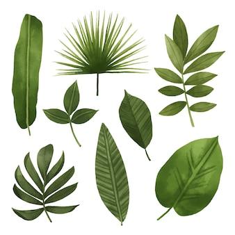 Concepto de colección de hojas