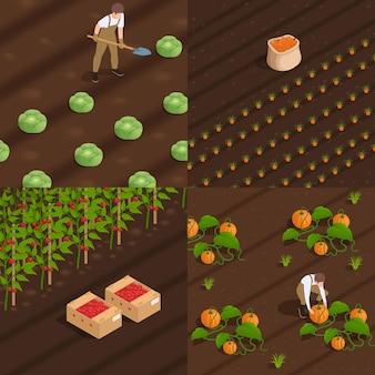 Concepto de cosecha 4 composiciones isométricas con trabajadores agrícolas.